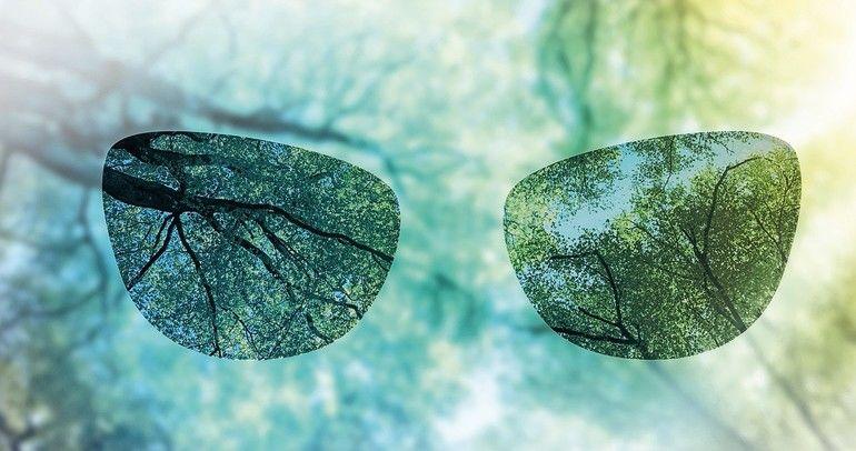 Wald_Panorama_mit_frisch_grünen_Buchen,_die_mittig_platzierte_Sonne_wirft_schöne_Strahlen